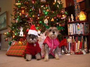 Christmas dogs by Christmas tree